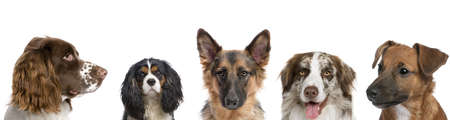 Portrait of different breeds of dogs against white background, studio shot photo