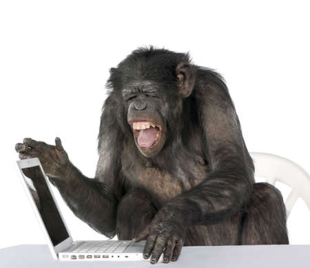 Portrait of Chimpanzee playing with a laptop against white background, studio shot  photo