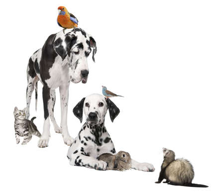 rodents: Group of pets : dog, bird, rabbit, cat, ferret in front of white background