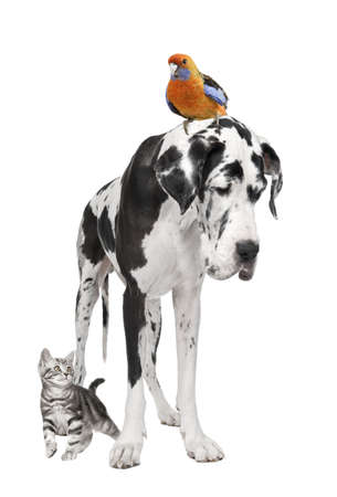 Group of pets : dog, bird, cat in front of white background Stock Photo