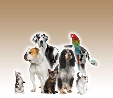Group of pets standing in front of white and brown background, studio shot photo