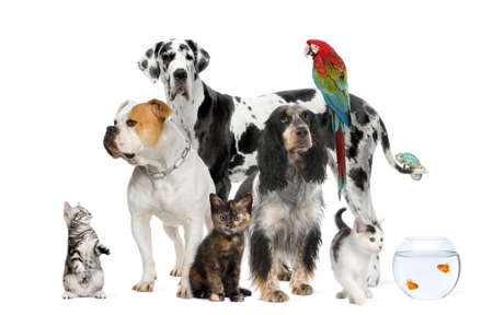 medium shot: Group of pets standing in front of white background, studio shot