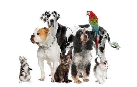 dogs sitting: Grupo de animales de compa��a de pie delante de fondo blanco, foto de estudio