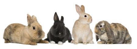 Bunny rabbits sitting in front of white background, studio shot photo