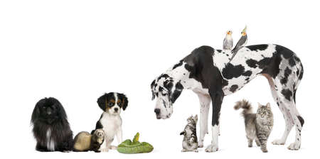 Group of pets in front of white background, studio shot photo