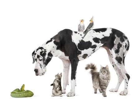 perico: Grupo de mascotas en frente de fondo blanco, disparo de estudio