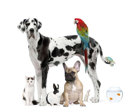 Group of pets standing in front of white background, studio shot photo