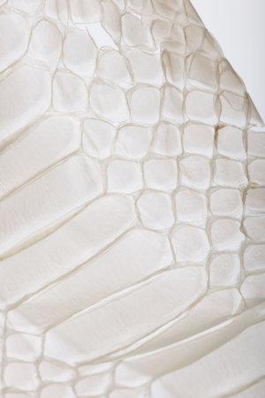 scaled: Close-up of squamata, scaled reptile