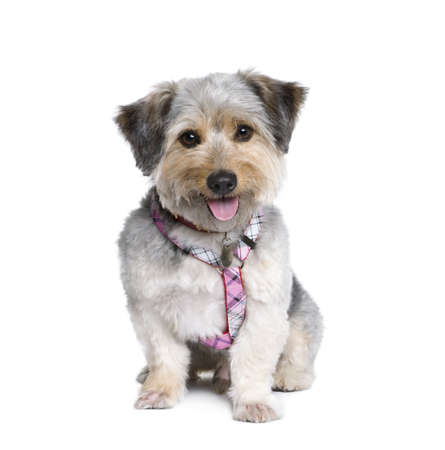 Cross Breed dog, 4 years old, in front of white background, studio shot photo