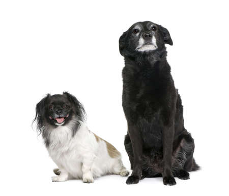 11 years: Two dogs, 3 and 11 years old, sitting in front of white background, studio shot