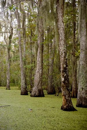 Moeras in de buurt van New Orleans, Louisiana