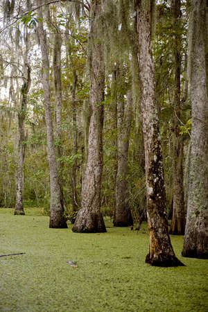 new orleans: Swamp near New Orleans, Louisiana Stock Photo