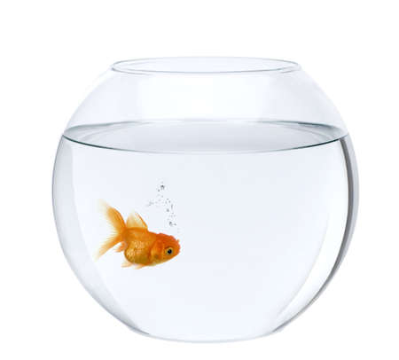Goldfish in fish bowl, in front of white background, studio shot Stock Photo - 6379127