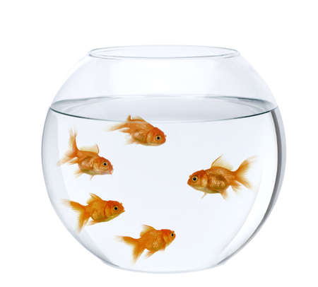 Five goldfish in fish bowl, in front of white background Stock Photo - 6378766