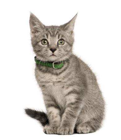 Europeo gato de gatito, 3 meses de edad, sentado delante de fondo blanco
