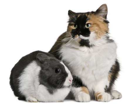 Cat and rabbit sitting in front of white background photo