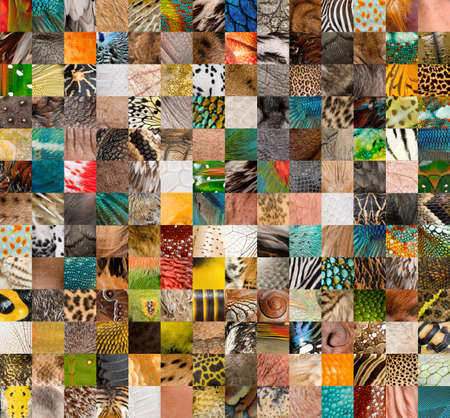 vertebrates: Patchwork of 196 animals and human skin