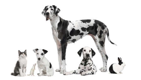 Group portrait of black and white animals - pets - in front of white background photo