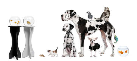 Group portrait of animals in front of black and white background photo