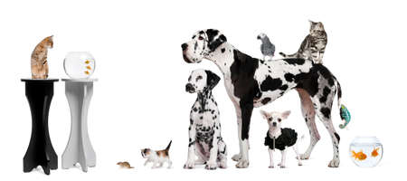 spotted dog: Group portrait of animals in front of black and white background