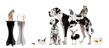 Portrait de groupe d'animaux en face de fond noir et blanc