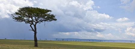 Africa landscape, Serengeti National Park, Serengeti, Tanzania photo
