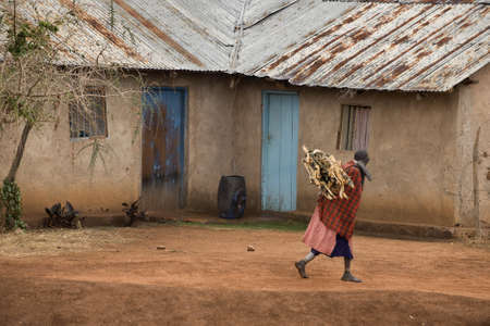 Woman carrying firewood through village, Tanzania, Africa photo