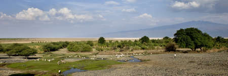 Landscape with African wildlife, Tanzania photo