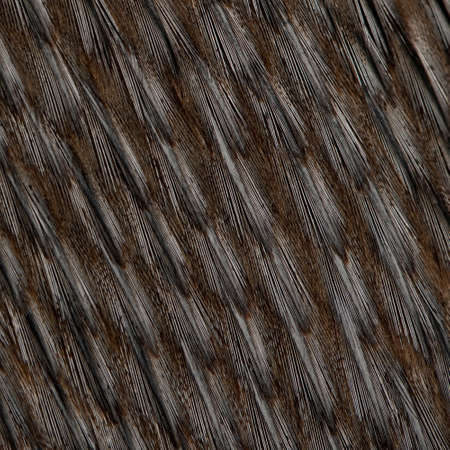 Close-up of Humboldt Penguin feathers, Spheniscus humboldti photo