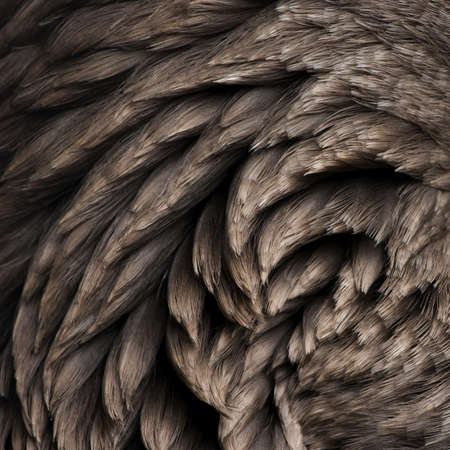 Close-up of Toulouse goose feathers photo