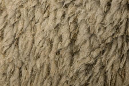 arles: Close-up of Arles Merino sheep wool Stock Photo