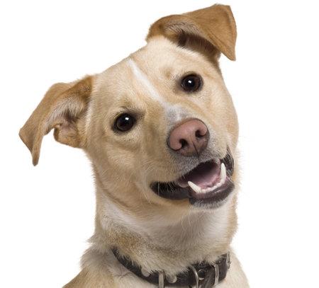 9 months old: Close-up de perro de raza mixta, 9 meses de edad, en frente de fondo blanco