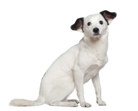 Mixed-breed dog, 3 years old, sitting in front of white background photo