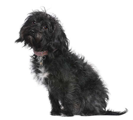 Mixed-breed dog, 10 months old, sitting in front of white background photo