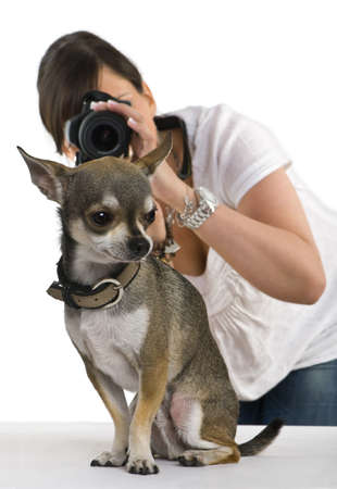 Chihuahua, 3 years old with a photographer behind, in front of white background photo