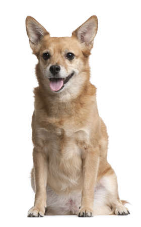 Mixed-breed, 9 years old, sitting in front of white background