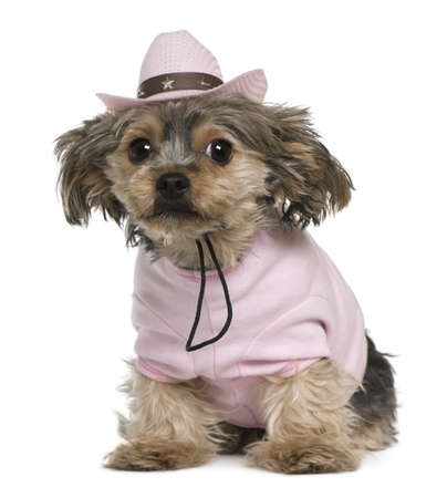 Yorkshire terrier, 2 years old, dressed and wearing a pink cowboy hat sitting in front of white background Stock Photo - 7251088