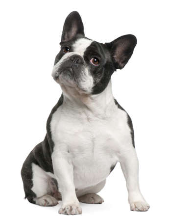 french bulldog: French Bulldog, 3 years old, sitting in front of white background