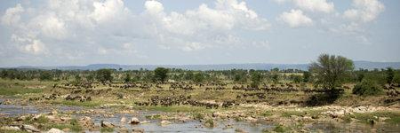 Wildebeest in the Serengeti, Tanzania, Africa photo