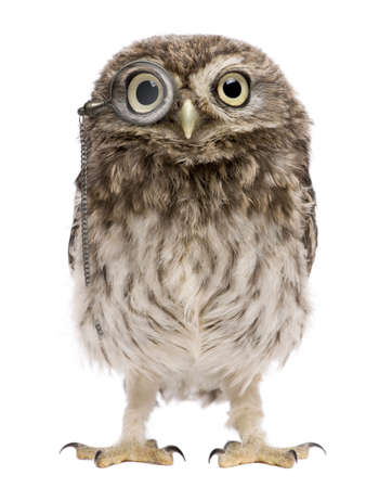 little bird: Little Owl wearing magnifying glass, 50 days old, Athene noctua, standing in front of a white background