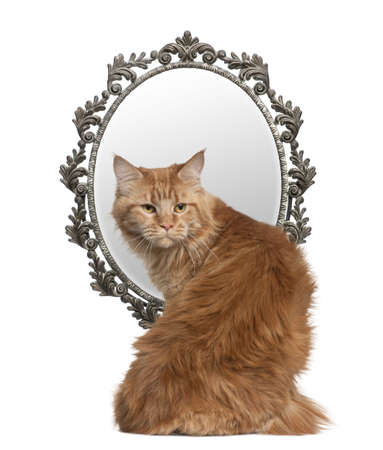Cat looking back with a mirror in background in front of white background photo