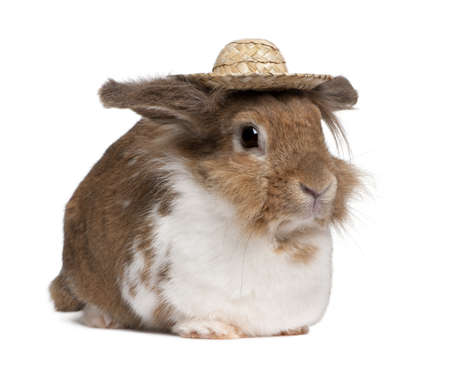 Portrait of a European Rabbit wearing a straw hat, Oryctolagus cuniculus, sitting in front of white background photo