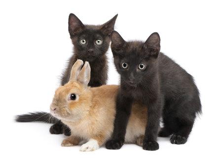 lapin blanc: Chaton noir jouant avec le lapin de fond blanc