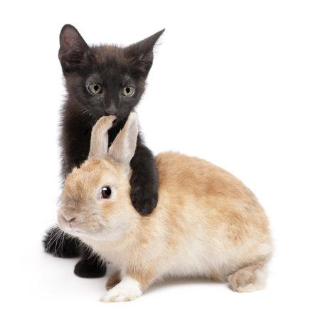 Chaton noir avec patte autour de lapin en face de fond blanc Banque d'images