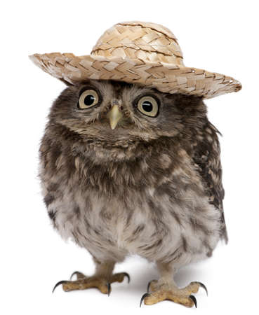 hat with feather: Young owl wearing a hat in front of white background