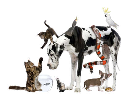 spotted dog: Group of pets together in front of white background
