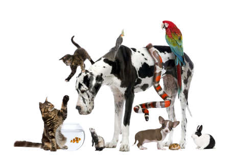 Group of pets together in front of white background photo
