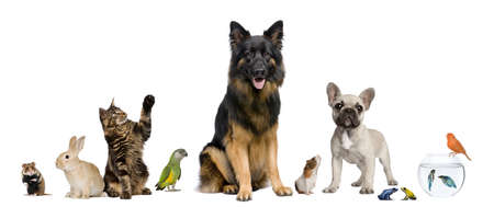 Group of pets together in front of white background Stock Photo - 7980651