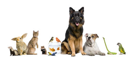 group of animals: Group of pets together in front of white background