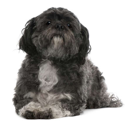 shih: Shih Tzu, 6 years old, lying in front of white background